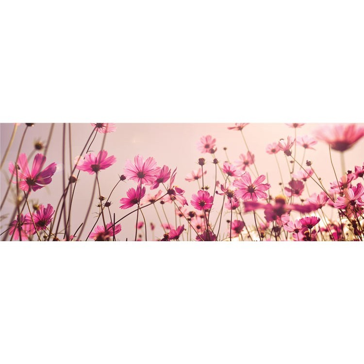 Ροζ λουλούδια, Φύση, Κρεμάστρες & Καλόγεροι