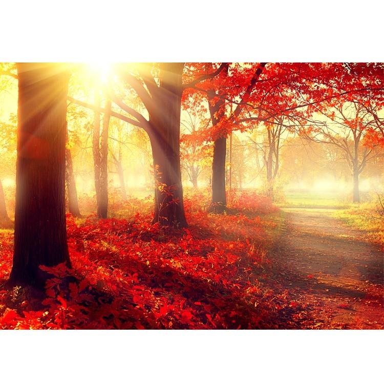 Κόκκινο Τοπίο, Φύση, Πίνακες σε καμβά