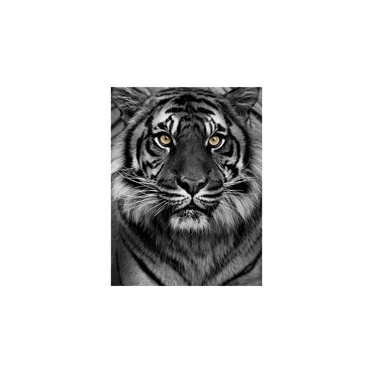 Μάτια τίγρης, Ζώα, Πίνακες σε καμβά