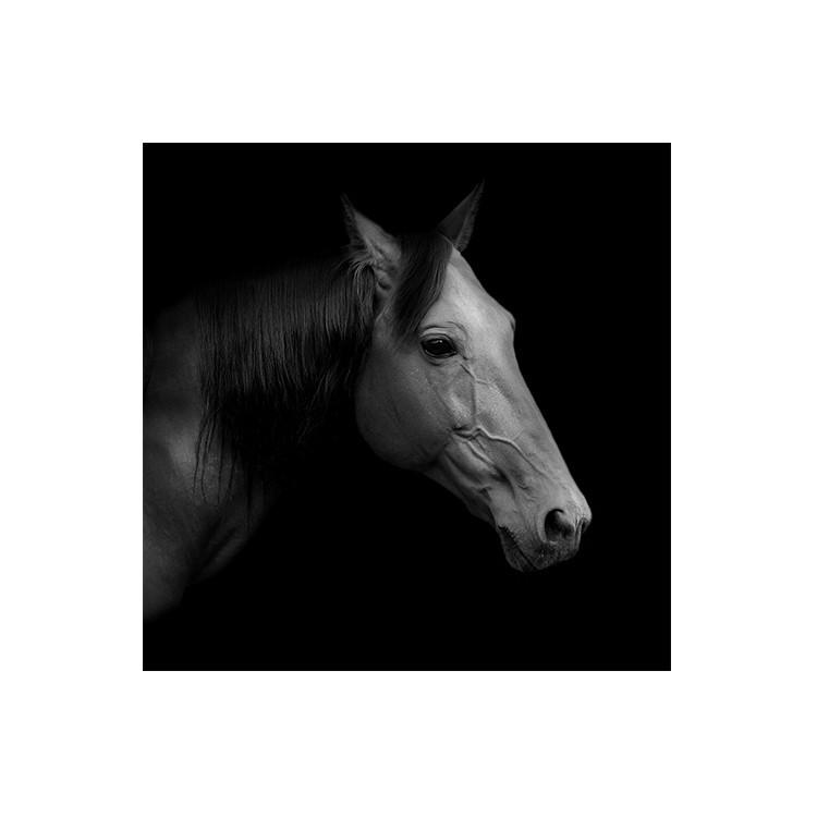 Άλογο trotter, Ζώα, Πίνακες σε καμβά