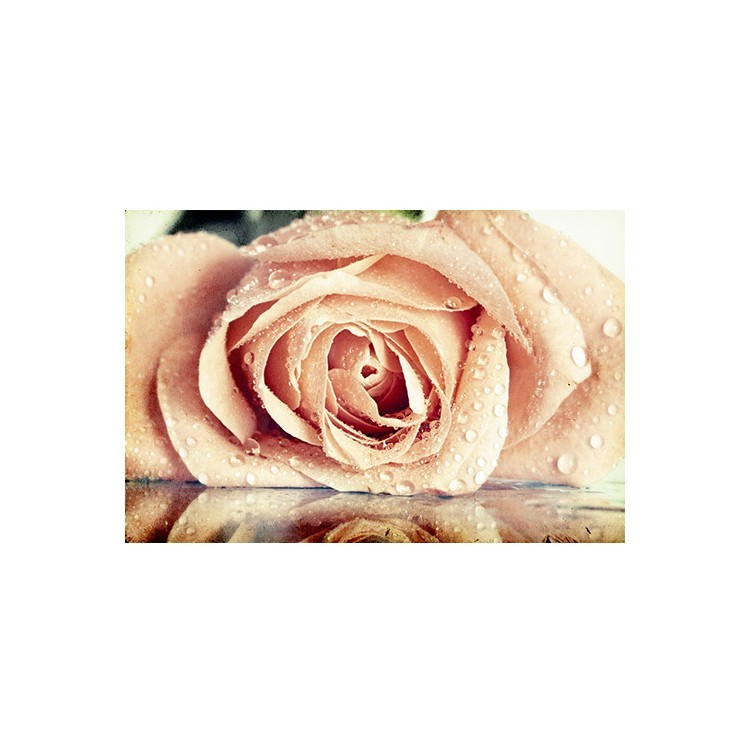 Τριαντάφυλλο, Vintage, Multipanel
