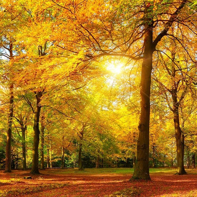 Δάσος, Διάφορα, Επιτραπέζια φωτιστικά