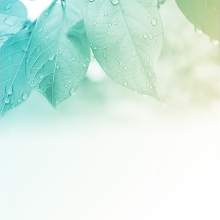 Σταγόνες Δροσιάς, Φύση, Ταπετσαρίες Τοίχου