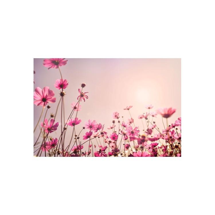 Λουλούδια, Φύση, Ρολοκουρτίνες