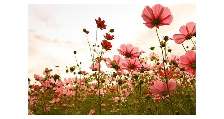 Λουλούδια, Vintage, Αυτοκόλλητα ντουλάπας