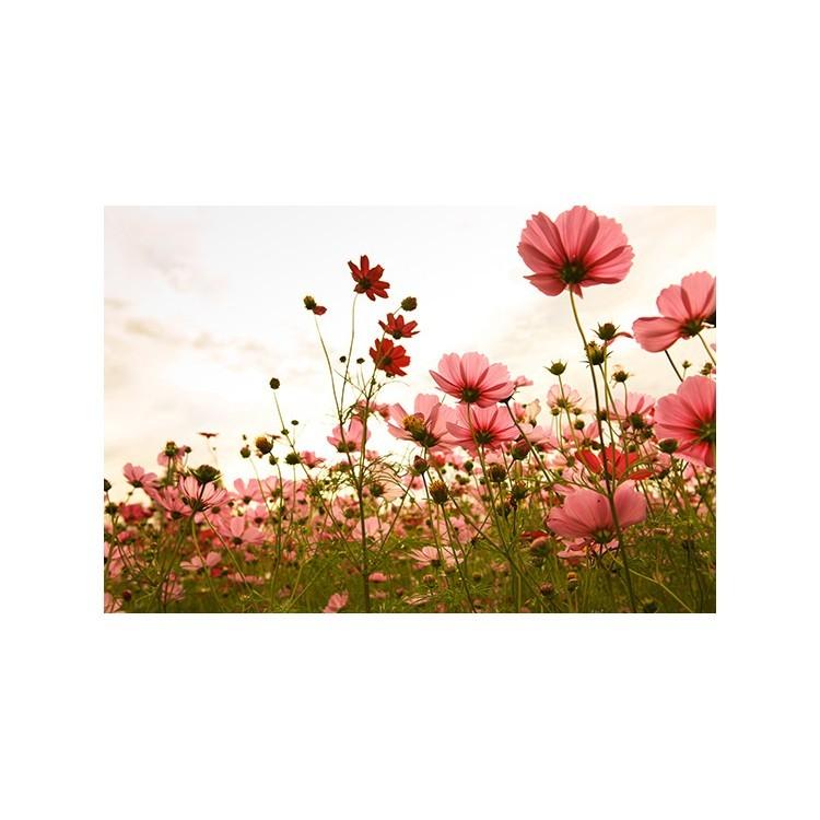 Λουλούδια, Vintage, Πίνακες σε καμβά