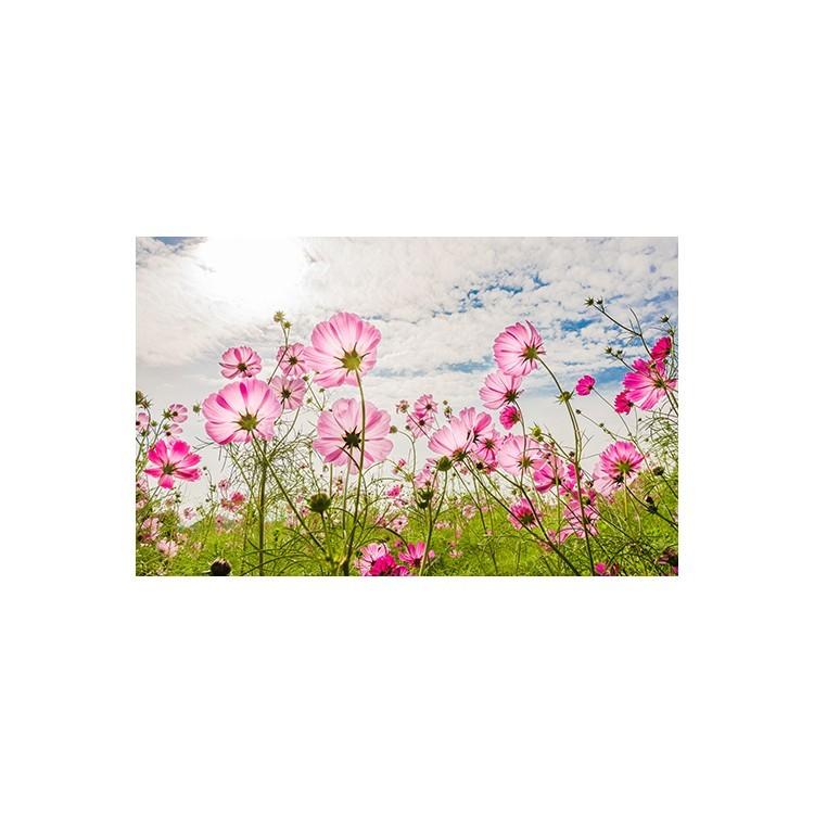 Ροζ Λουλούδια, Vintage, Multipanel