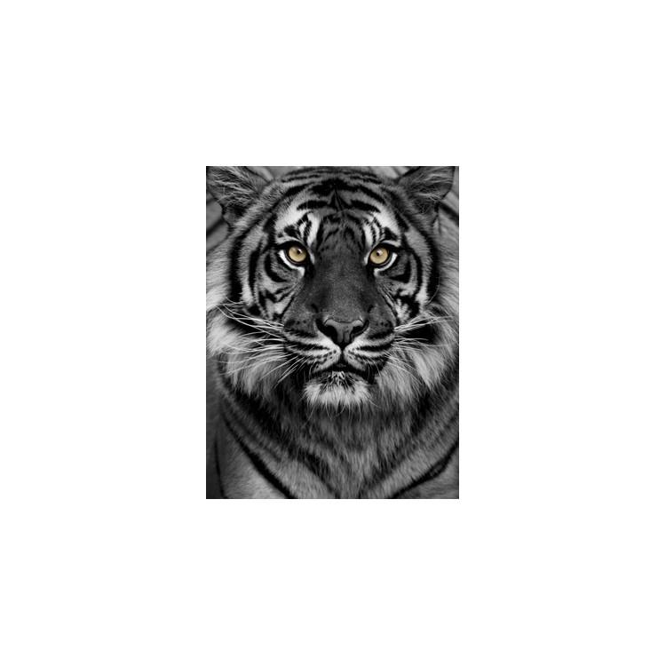 Μάτια τίγρης, Ζώα, Ταπετσαρίες Τοίχου