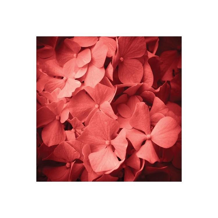 Κόκκινες ορτανσίες, Φόντο, Παραβάν