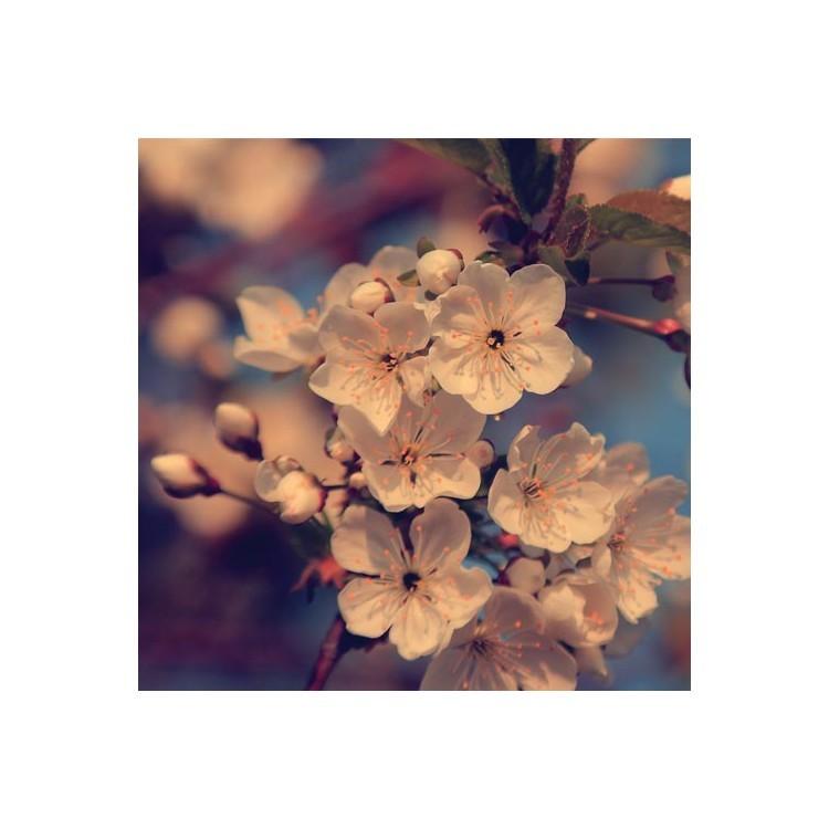 Άνθος μηλιάς, Φόντο, Παραβάν