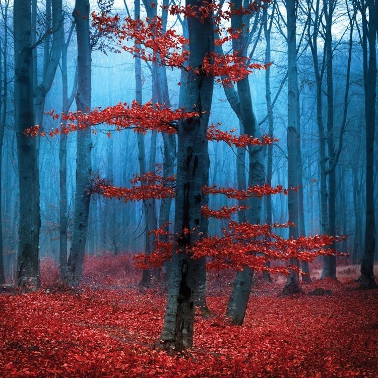 Κόκκινα Φύλλα, Φύση, Παραβάν
