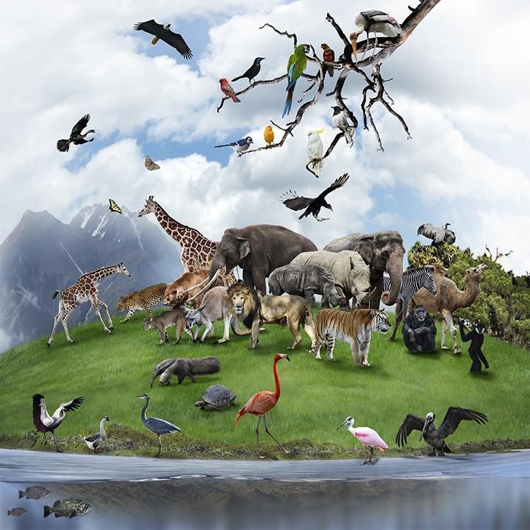 Άγρια Ζώα, Παιδικά, Παραβάν