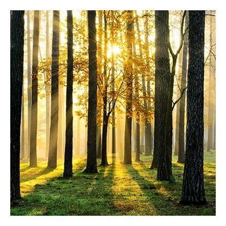 Ειδυλλιακό δάσος