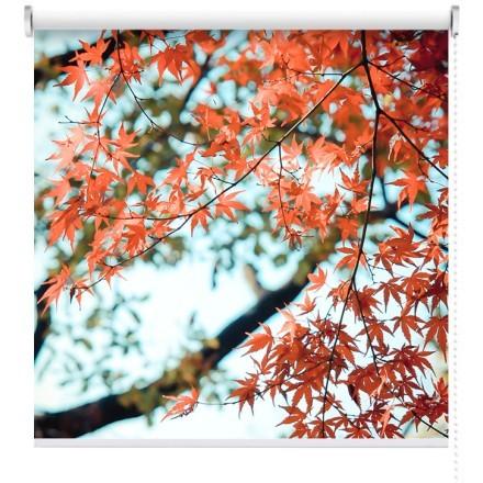 Κόκκινα σφεντάμια