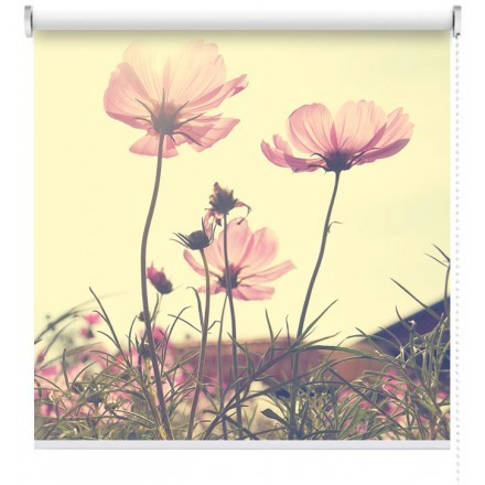Λουλούδια «Κόσμος»