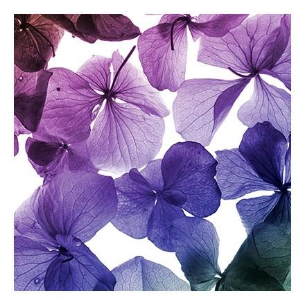 Φόντο λουλούδια