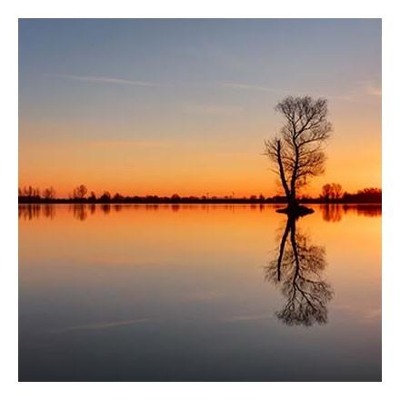 Δέντρο μέσα στη λίμνη