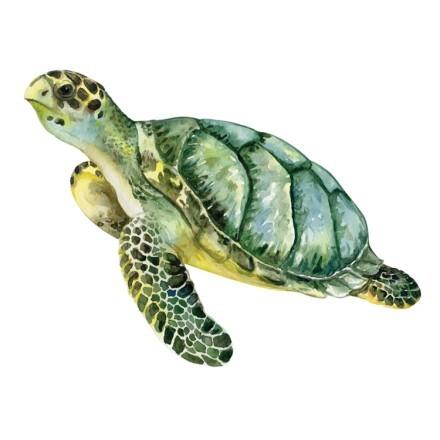 Θαλάσσια χελώνα κολυμπάει