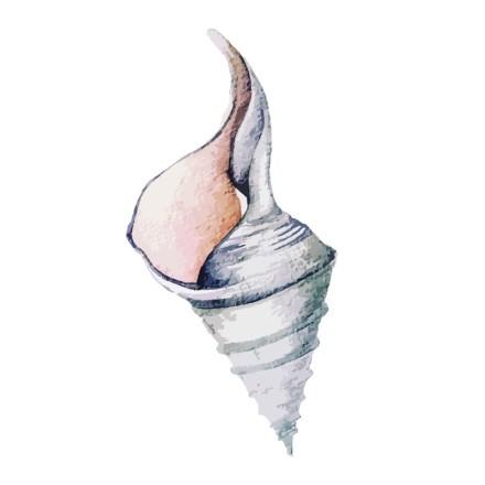 Κοχύλι-1