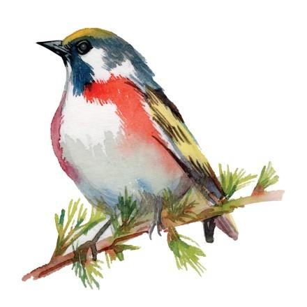 Πολύχρωμο πουλί