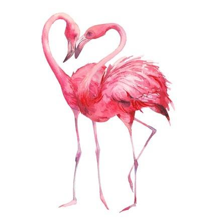 Couple flamingo