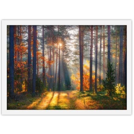Ήλιος πίσω από δέντρα