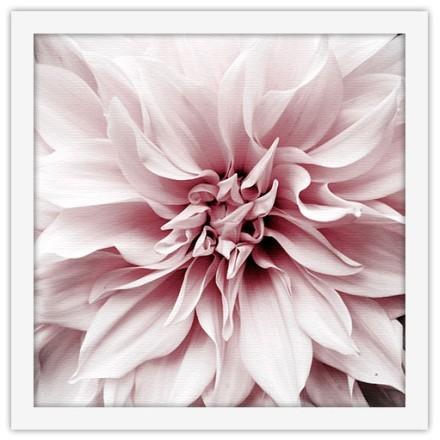 Άνθος ροζ λουλουδιού