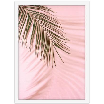 Φύλλο φοίνικα σε ροζ τοίχο