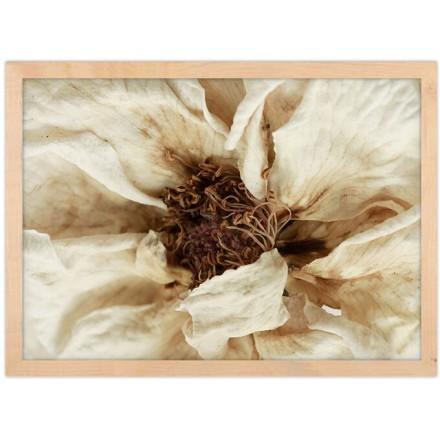 Λευκό λουλούδι