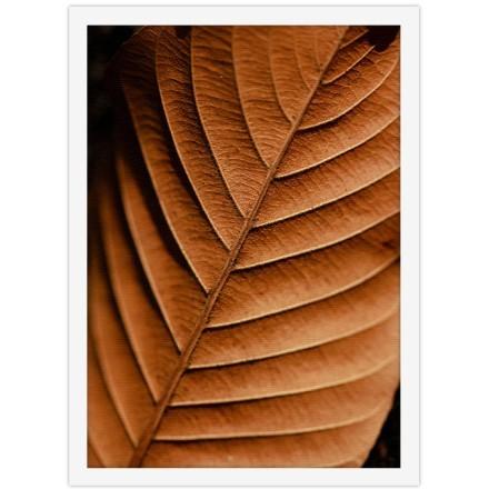 Ξερό καφέ φύλλο
