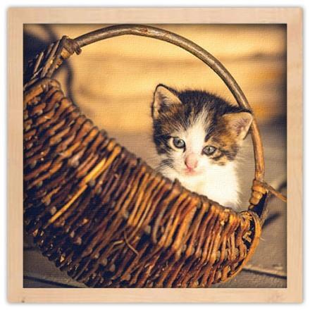 Χαριτωμένο γατάκι μέσα στο καλάθι
