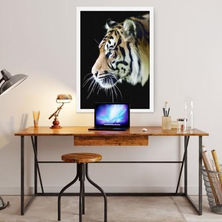 Τίγρης που κοιτάει