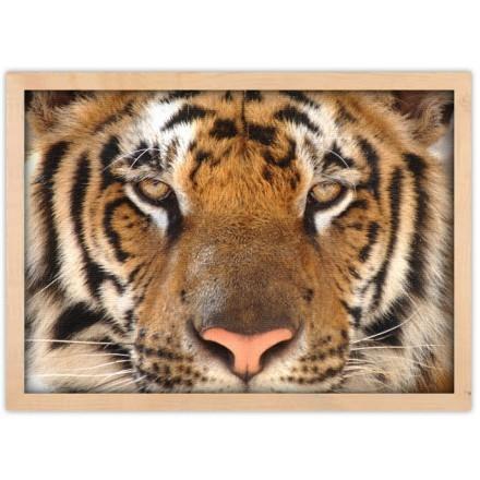 Τα μάτια της τίγρης