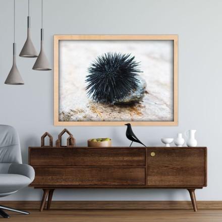 Μαύρος αχινός