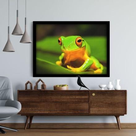 Βάτραχος Αυστραλίας