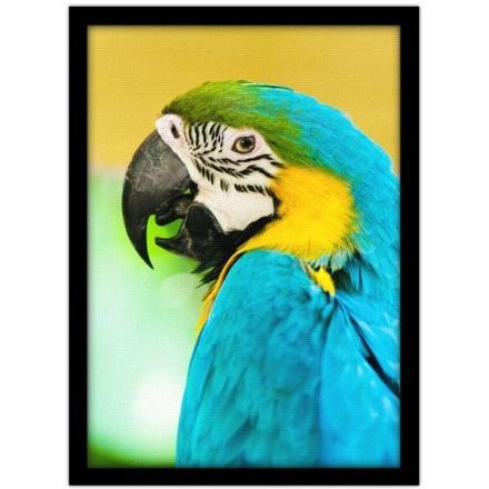 Πολύχρωμος παπαγάλος