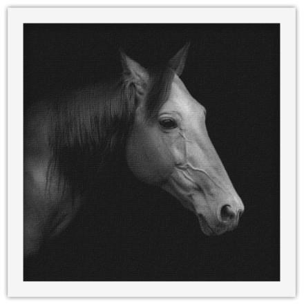Άλογο trotter