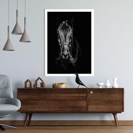 Μαύρο άλογο στο σκοτάδι
