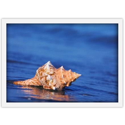 Κοχύλι σε μπλε νερά