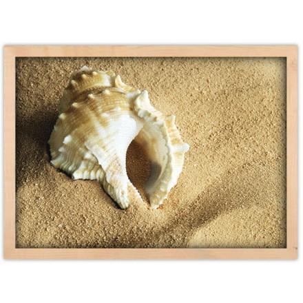 Κοχύλι στην αμμουδιά