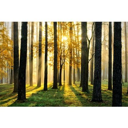 Κορμοί δέντρων