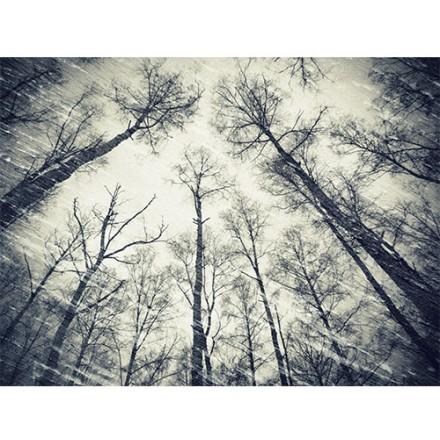 Ψηλά δέντρα
