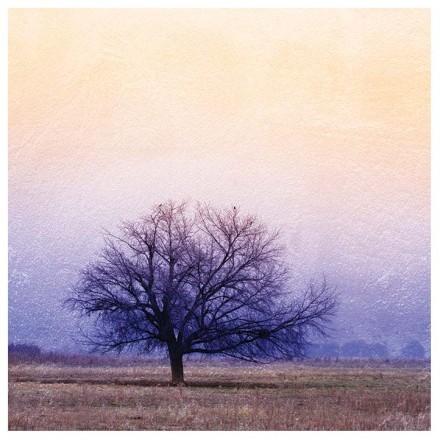 Mωβ δέντρο