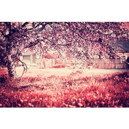 Ανθισμένο δέντρο