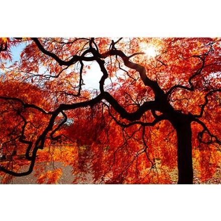 Φθινόπωρο στην Ιαπωνία