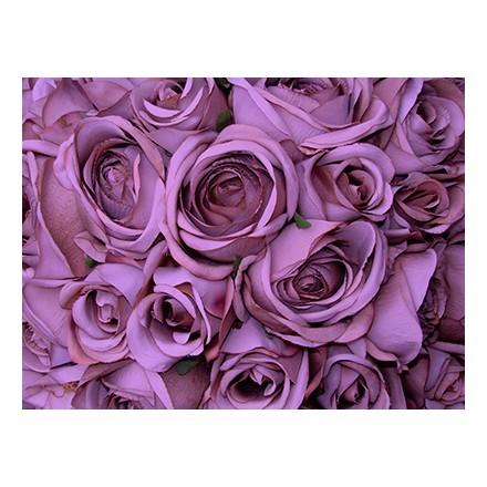 Τριαντάφυλλα μωβ