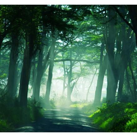Τροπικό δάσος