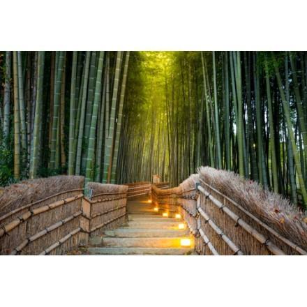 Δάσος από μπαμπού στο Κιότο
