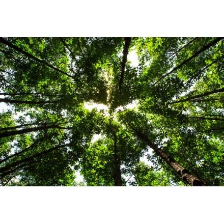 Δέντρα στο δάσος