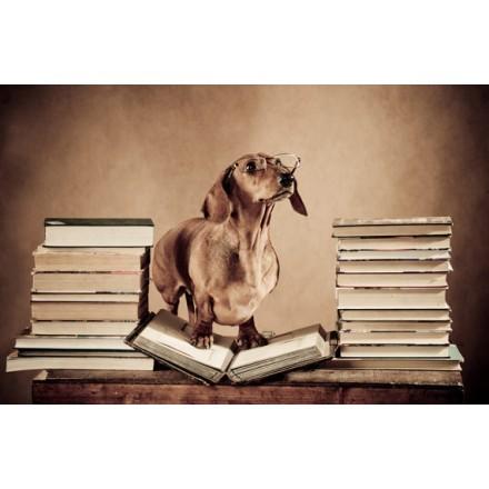 Σκύλος καθηγητής